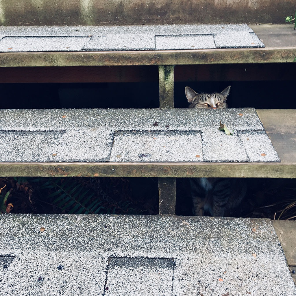 Cat hiding under stairs